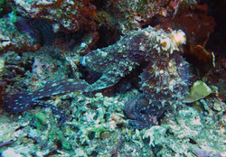 octopus terry
