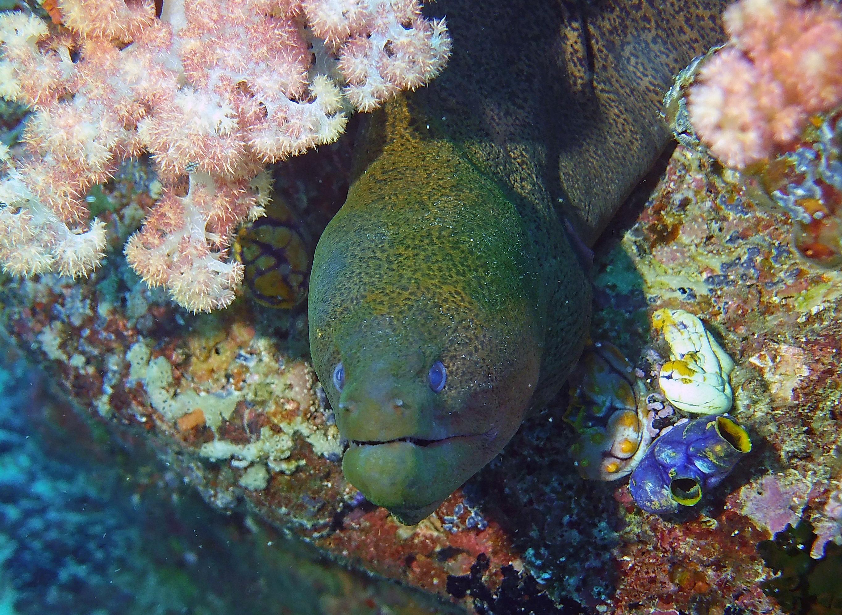 eel terry