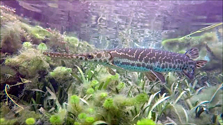 gar enhanced