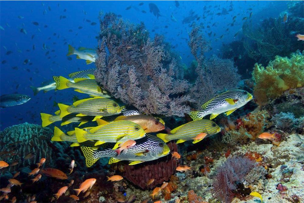 Aurora-Liveaboard-Reef