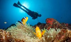 Dive-Rainbow-Reef-3-800x480