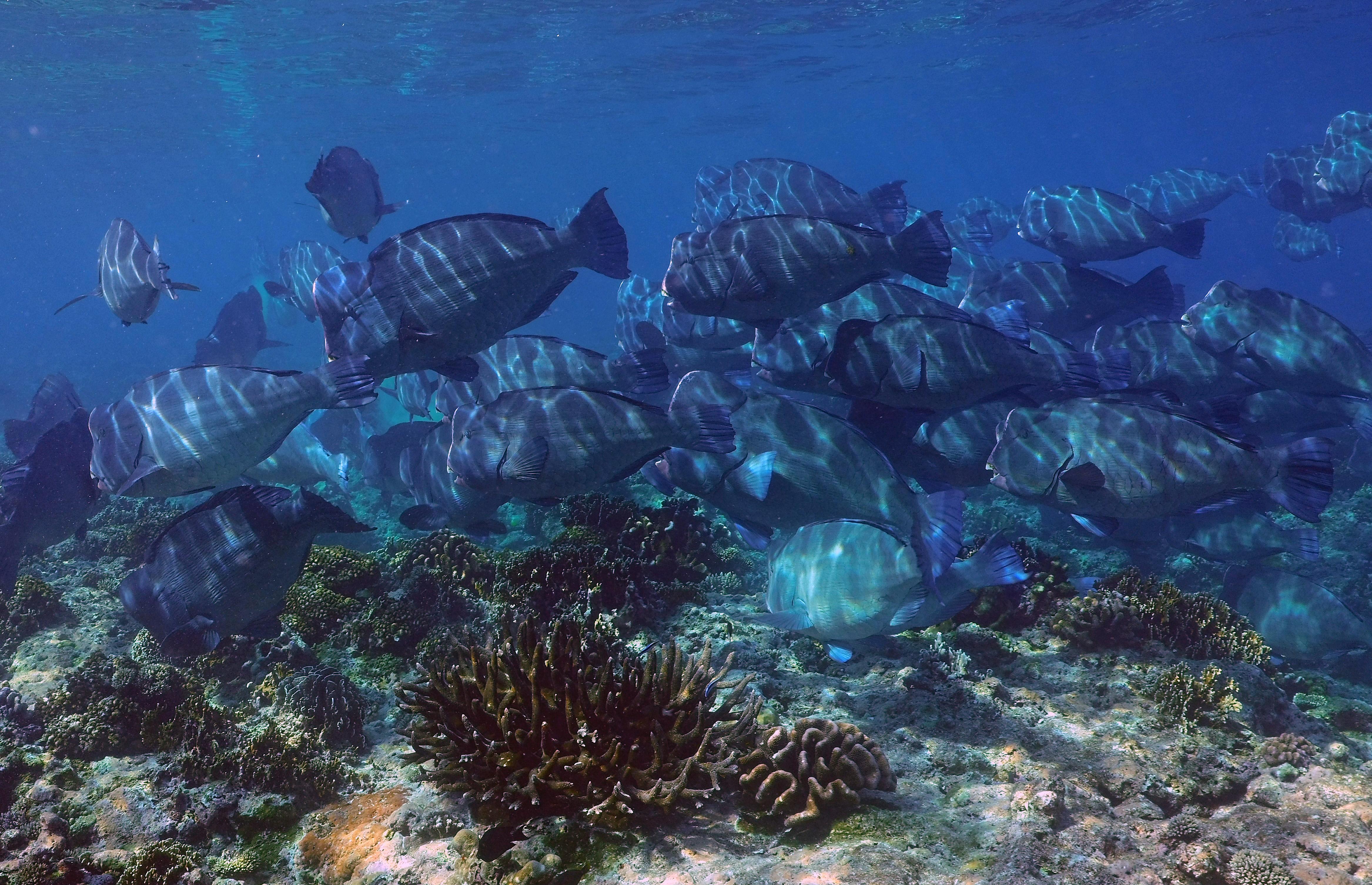Lee ParrotFish