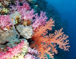 itinerary-coral-1