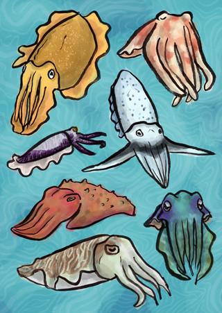 cuttlefish_fin.jpg