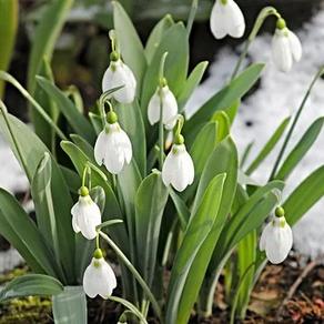 Que faire en février dans mon jardin ?