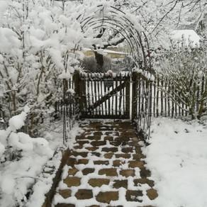 Que faire en janvier dans mon jardin ?