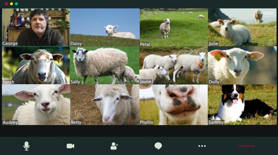 Farmdrop WFH Sheep