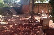 Local onde foi encontradoo 1º escorpião amarelo em Ivaipoã-PR