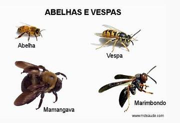 Diferença entre abelhas e vespas