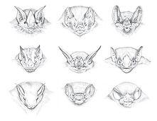 Diferentes espécies de morcegos