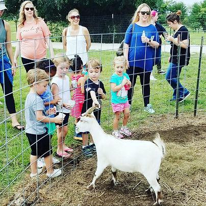 feeding goats farm party.jpg