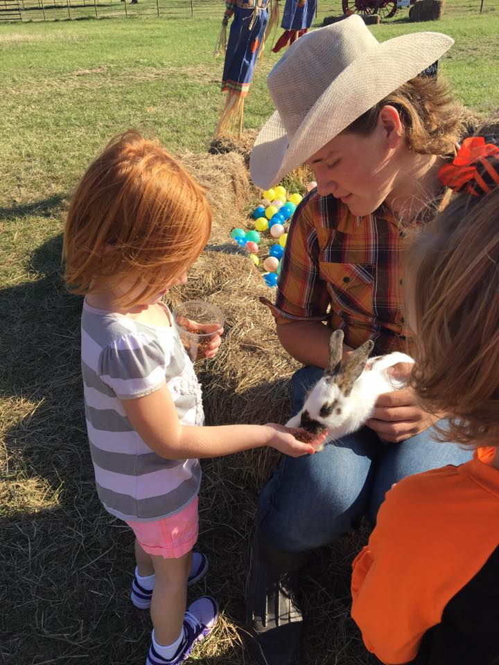 Aubrey Texas Pumpkin Patch