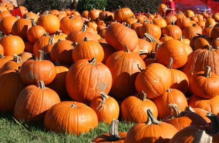 Pumpkins for sale!