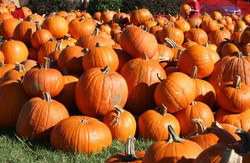 Pumpkins for sale!