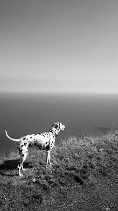 Pet Sitter & Dog Walker Bognor Regis