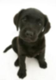 Pet Sitter Puppy Visits Bognor Regis