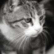 Pet Sitter & Cat Sitter Bognor Regis