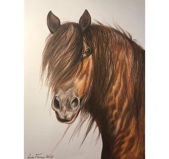 horse-colour copy.jpg
