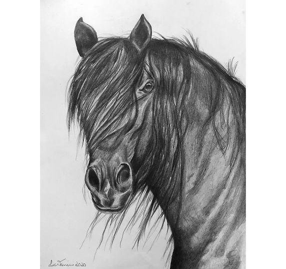 horse-pb copy.jpg