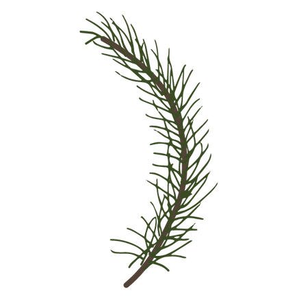 Pine%20Spruce%20Branches%206_edited.png
