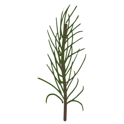 Pine%20Spruce%20Branches%209_edited.png