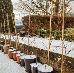 Tree Nursery - February '21