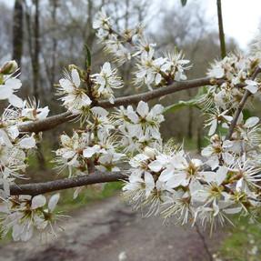 Tree Nursery - April '21