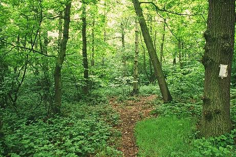 s960_woodland.jpg
