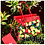 Thumbnail: Swagg Bag (Clear Red & Lemon Print)