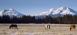 oregon equine horse non-profit found