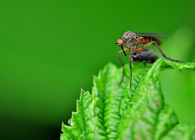 insect-4276175_1920.jpg
