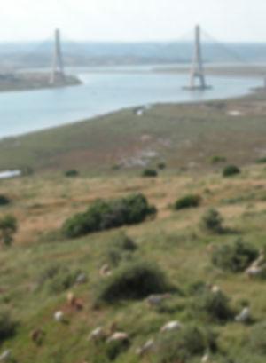 02. Desde el Parador hacia el puente int