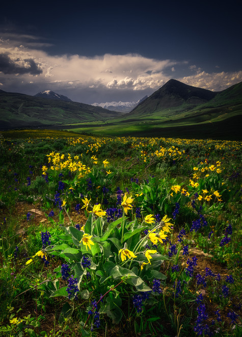 Crested Butte Prints 2-5 COMPRESSED.jpg