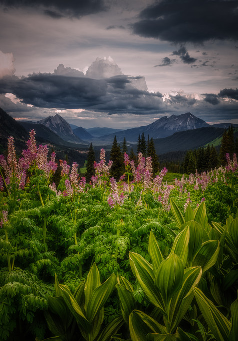 Crested Butte Prints 2-20.jpg