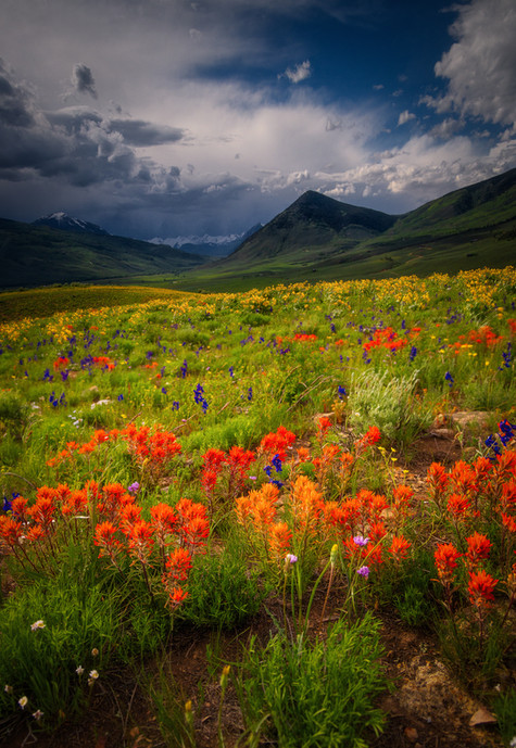 Crested Butte Prints 2-6 COMPRESSED.jpg