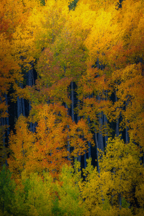 Crested Butte Prints-6 COMPRESSED.jpg