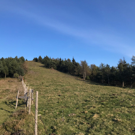 Es recuperen 1,37 hectàrees de pastures a la collada de Prats