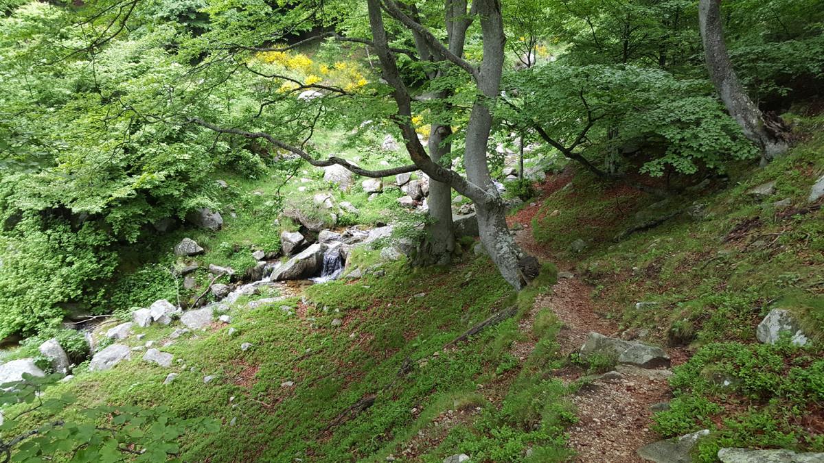 Bosc i riu