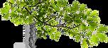png-file-name-tree-branch-transparent-pn