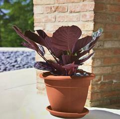 Linteo Pot - Terracotta