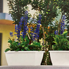 Dune Plant Box with Saucer - White/Terracotta