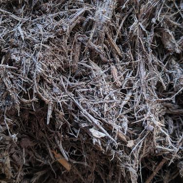 Shredded Hemlock
