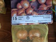 Onion Sets - Shallot