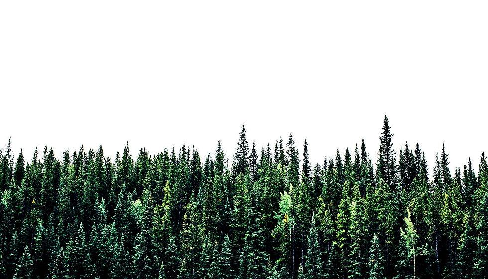 tree-line-on-white_1600.jpg