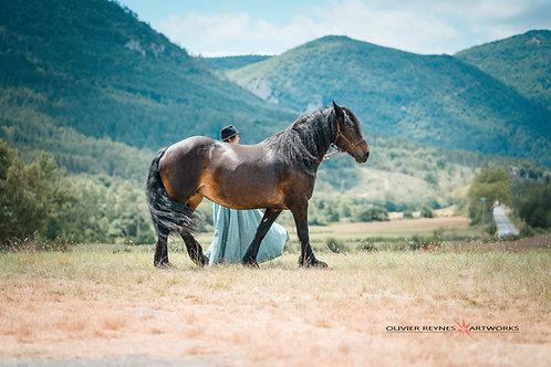 Cheminer avec les chevaux, le 14 juillet