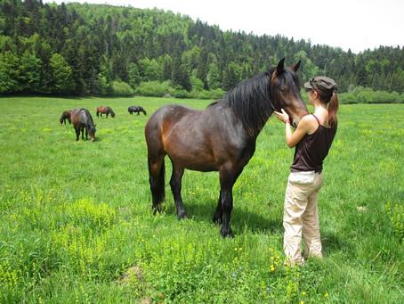 Stage ecouter et comprendre les chevaux autrement - 4 au 7 juin