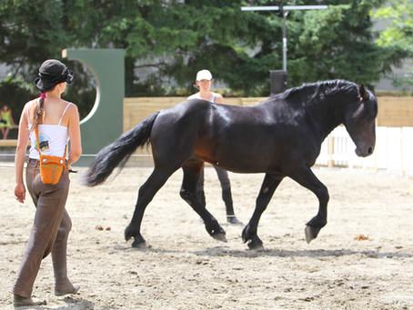 Stage d'initiation - Communiquer avec le cheval autrement - 7, 8, 9 août