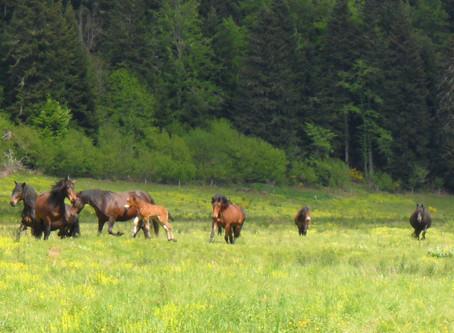 Randonnée au lac de Montbel, du 2 au 6 septembre