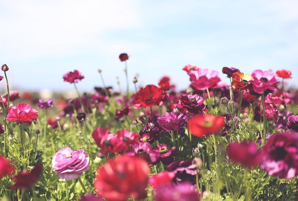 garden-JX9GPSN.jpg