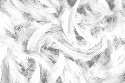 The feather filling of a duvet.